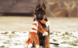 как ухаживать за лапами собак зимой